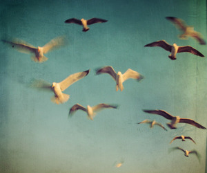 birds and photography image