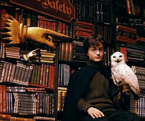 harry potter and hedwig image