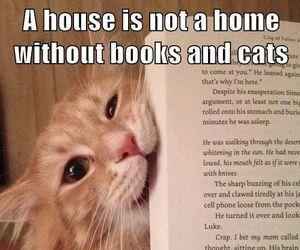 books, cat, and animals image