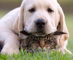 dog and cat image