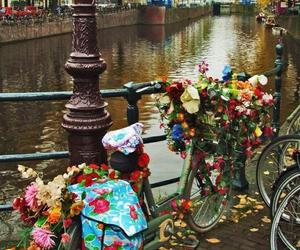 flowers, amsterdam, and bicycle image