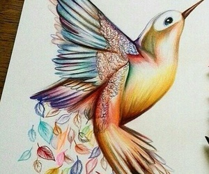 bird, color, and animal image