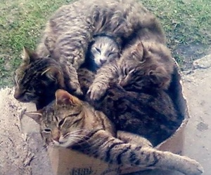 cat, kitten, and cute cats image