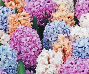 flowers, beautiful, and colorful image