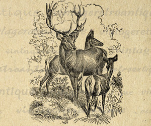 animal, animals, and antlers image