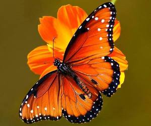 butterfly, nature, and animals image