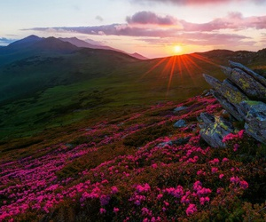 flowers, mountains, and romania image