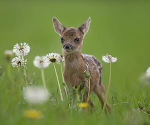 baby animals, flowers, and cute animals image