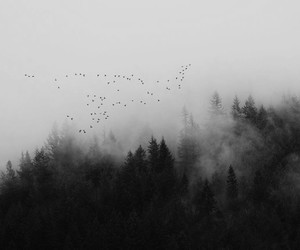 birds, forest, and aesthetic image