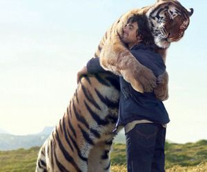 tiger, animal, and hug image