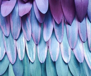 chic, nature, and feathers image