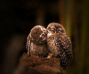 owl, love, and animal image