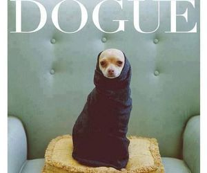 dog, vogue, and funny image