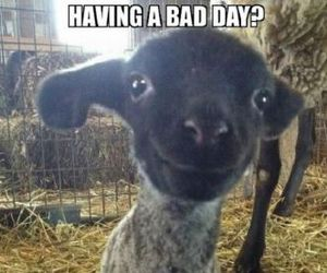lamb, cute, and smile image
