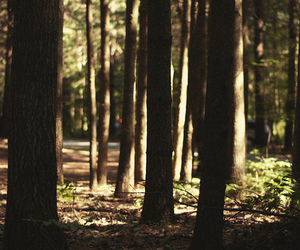 hipster, summer, and trees image