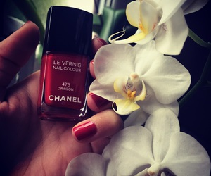 chanel, dragon, and flower image