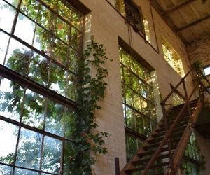 abandoned, plants, and house image