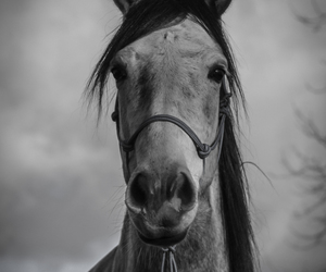 b&w, beautiful, and horse image