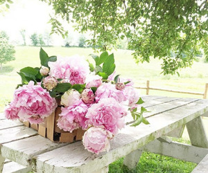 outside, peonies, and table image