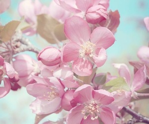 cherry blossom, colors, and flowers image