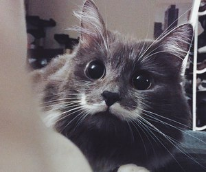 animal, moustache, and black and white image