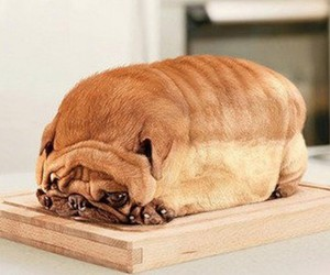 dog, bread, and funny image
