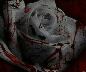 rose, blood, and white image