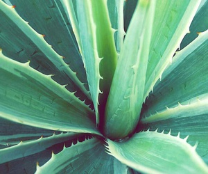 aloe, green, and iphone image