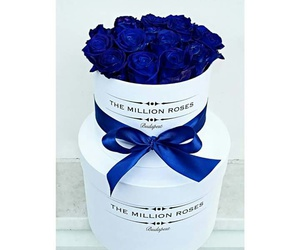 blue, box, and flower image