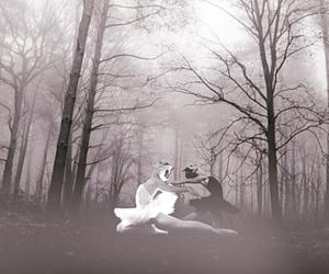 fog, forest, and Odette image
