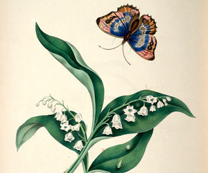 butterfly, flower illustration, and public domain image