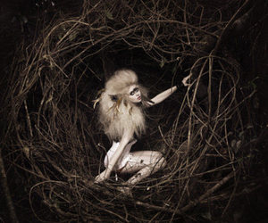 allison harvard, model, and ANTM image