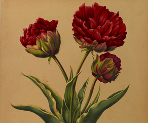 botany, swallowtail garden seeds, and spring bulb image