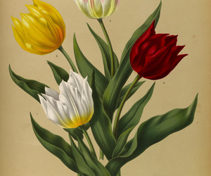 botany, swallowtail garden seeds, and bulbs image