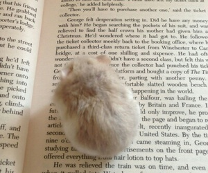 animal, book, and hamster image
