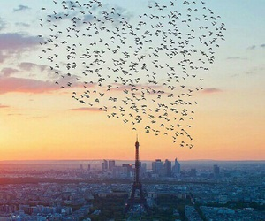 paris, bird, and heart image
