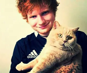 ed sheeran, cat, and cute image