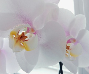 flower, natural, and orchid image