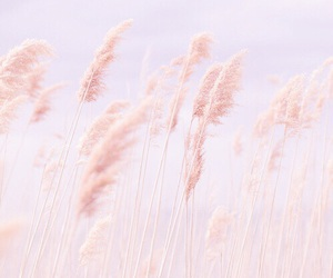 pink, pastel, and nature image