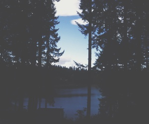 blues, forest, and lake image