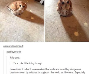 owl, funny, and tumblr image