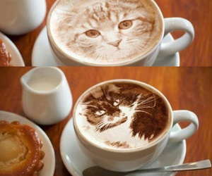 cafe, coffee, and cat image