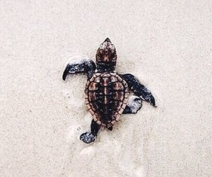 animals, beach, and turtle image