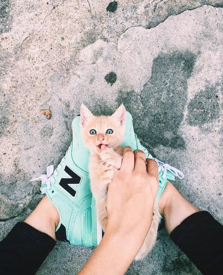 animal, street, and cute image