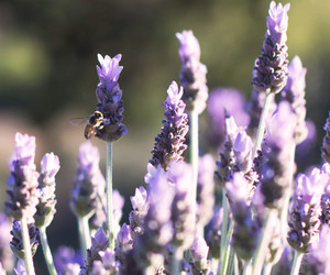 bee, boho, and lavender image