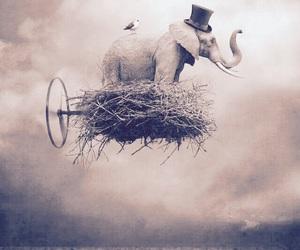 art, sogno, and bird image