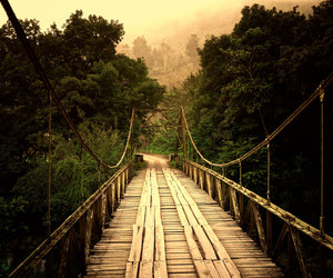 bridge and isac goulart image