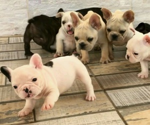 animals, baby animals, and dogs image