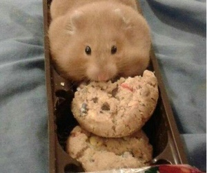 hamster, Cookies, and animal image