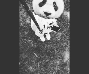 black-and-white and panda image